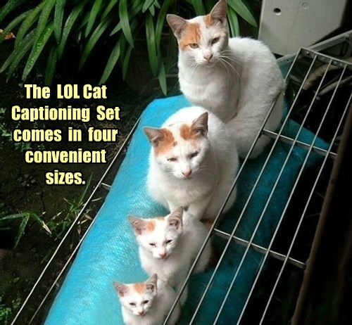 The LOL Cat Captioning Set comes in four convenient sizes.