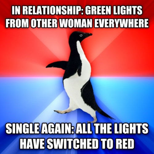 socially awkward penguin socially awesome awkward penguin relationships dating - 8242504448