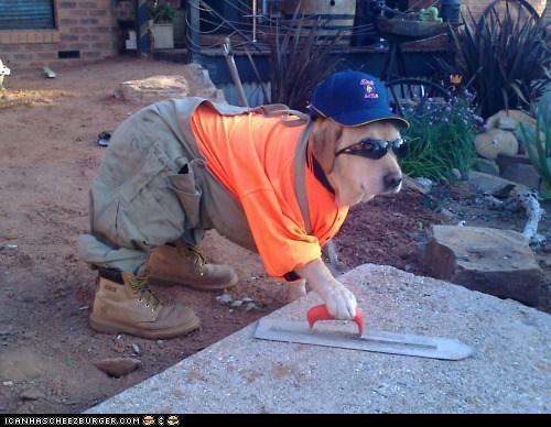 costume,cute,dogs,cement,funny