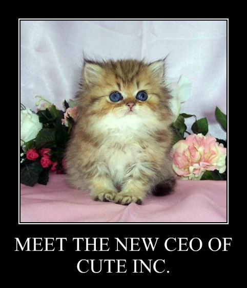 MEET THE NEW CEO OF CUTE INC.