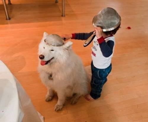 cute dogs colander kids sharing parenting - 8242746112