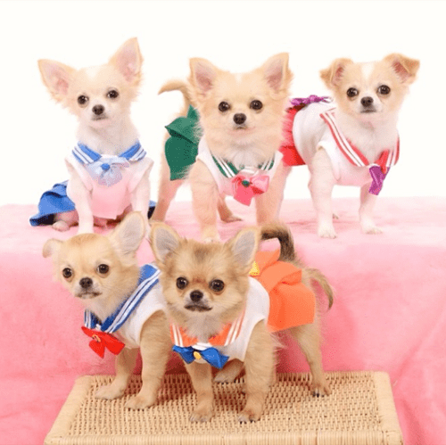 cosplay anime dogs sailor moon - 8242766848