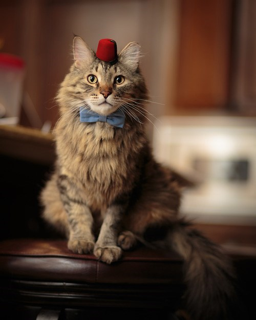 11th Doctor,Cats,bowties