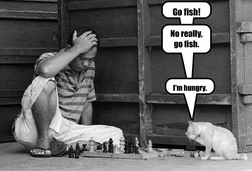 Cats fishing games puns - 8242917888