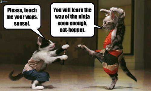 Cats,martial arts,ninja