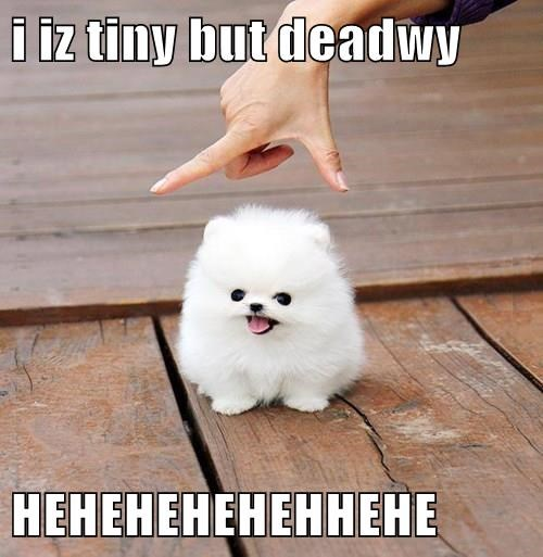 scary tiny puppies cute - 8243805952