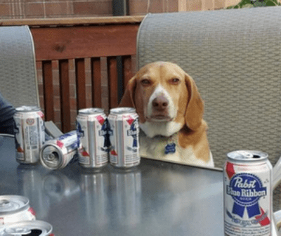 beer,dogs,funny,pbr
