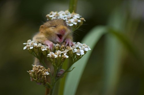 cute,flowers,climbing,hamsters