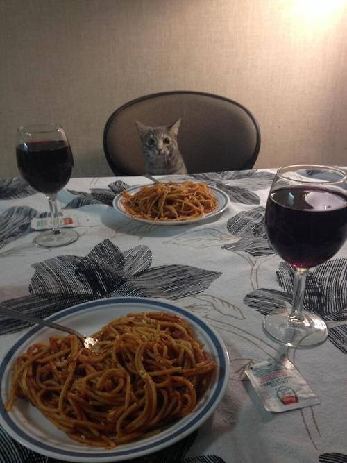 Cats crazy cat lady date dinner funny - 8243982336