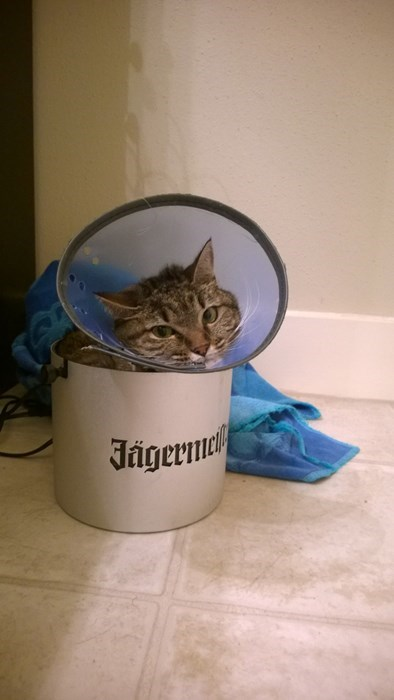 Cats,cone of shame,if i fits i sits