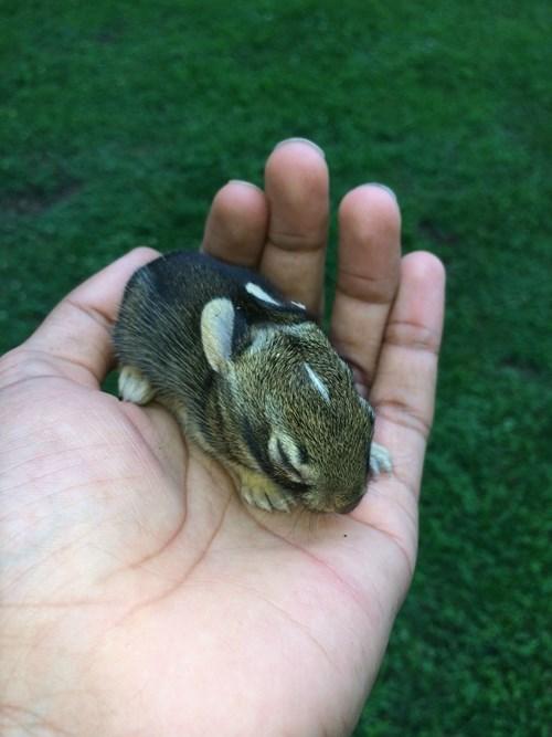Babies bunnies cute - 8243994112