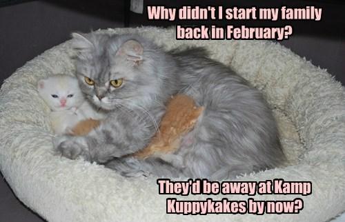 Cats kamp kuppykakes summer - 8243998720