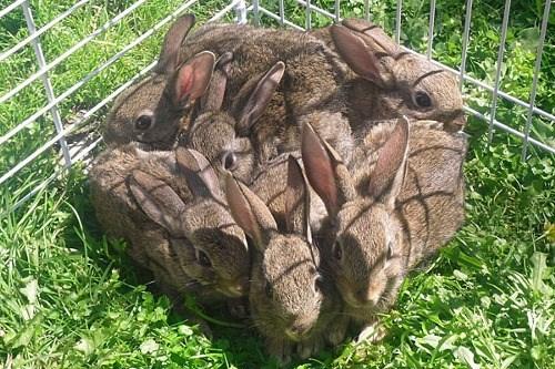 cute rabbits - 8244075264