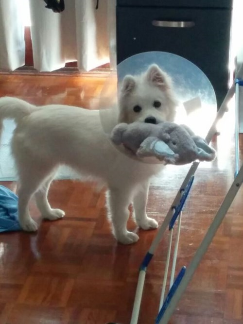cute cone of shame toys - 8244077312