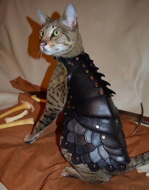 poorly dressed leather armor Cats g rated