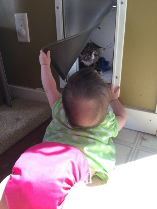 cat door,peekaboo,baby,parenting,Cats