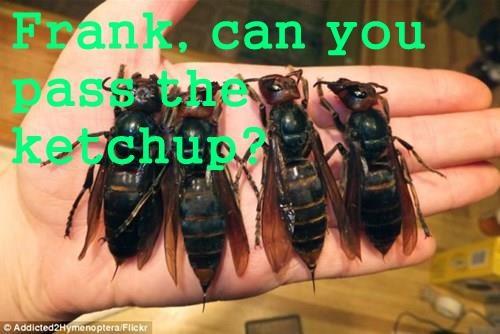 Cheezburger Image 8244856576