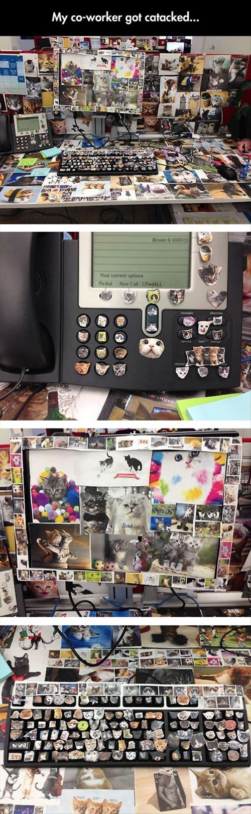 monday thru friday,cubicle prank,prank,Cats,cubicle,g rated