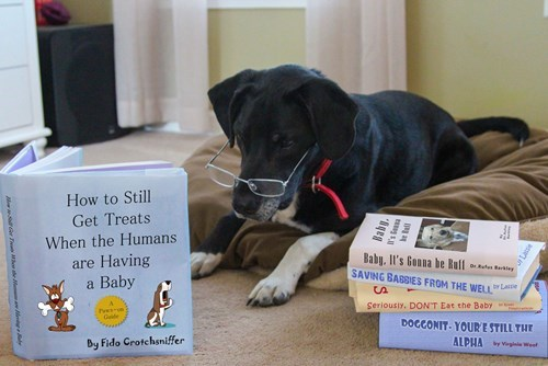 dogs baby parenting pregnant announcement g rated - 8244975360