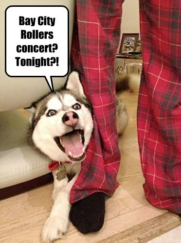 Bay City Rollers concert? Tonight?!