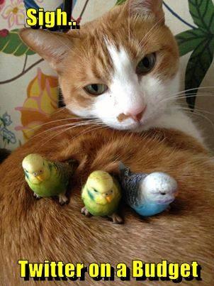 Cats birds twitter - 8245413376