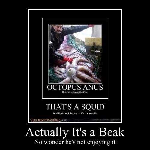 beak funny octopus - 8245712896