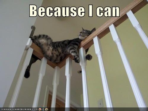 Cats balance funny - 8246834944