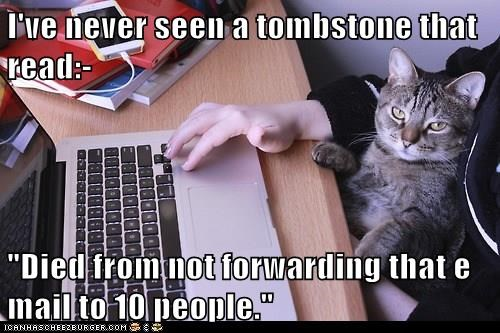 Cats chain mail funny - 8246840576