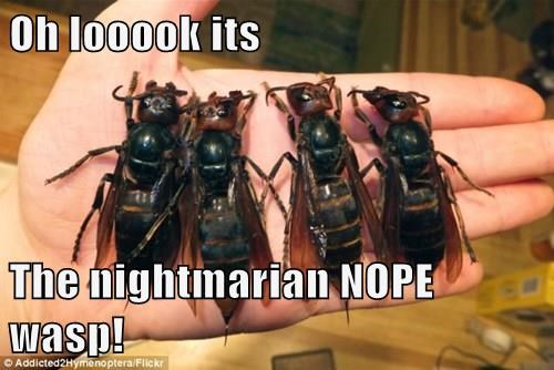 Oh looook its The nightmarian NOPE wasp!