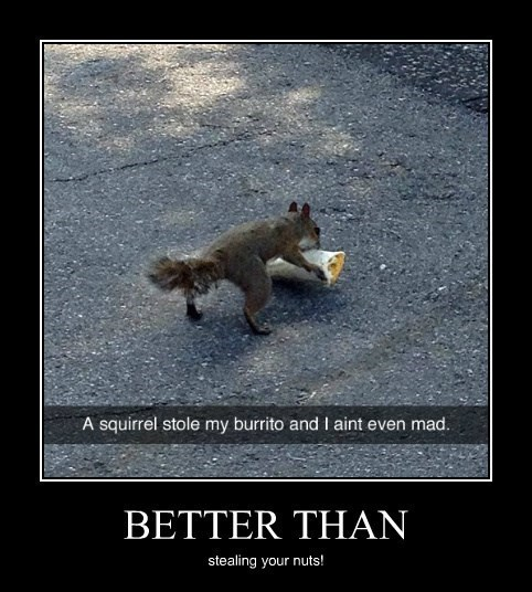 burrito squirrel funny animals - 8246959616