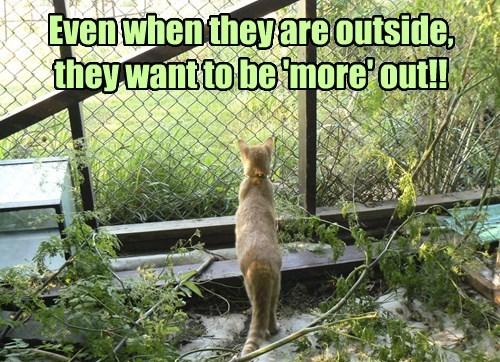 Cats outside - 8247058944