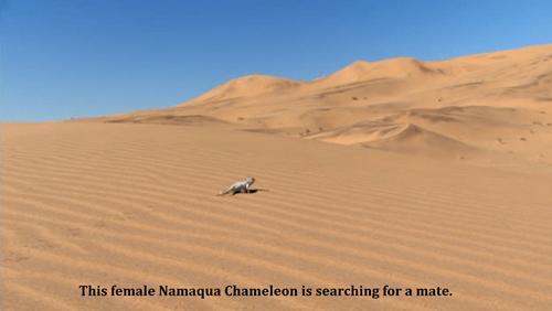 depressing desert funny dating g rated - 8247059712
