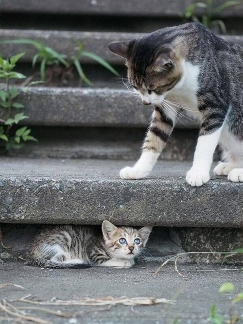 Cats,cute,hiding,kitten,mom