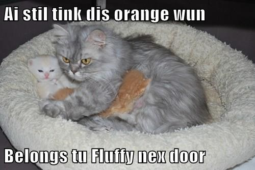 Ai stil tink dis orange wun  Belongs tu Fluffy nex door