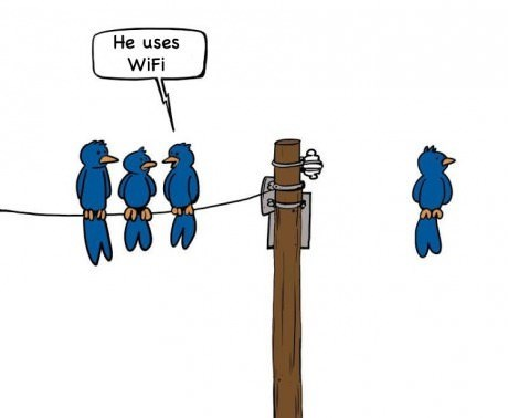 birds,wi-fi,web comics