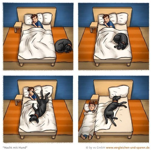 beds dogs web comics