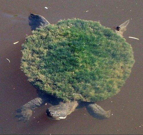 animals,IRL,turtles,torterra