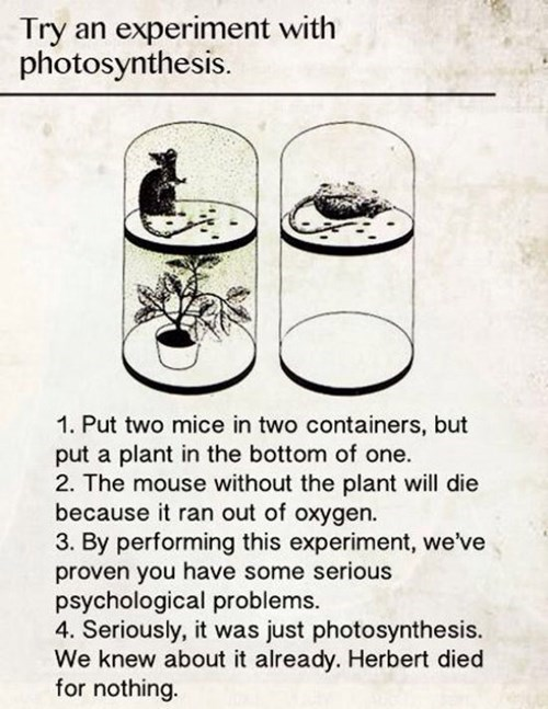 funny mouse oxygen photosynthesis plants - 8247824384