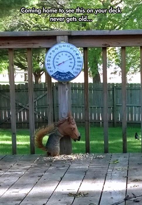 mask squirrels horses noms funny - 8247965952