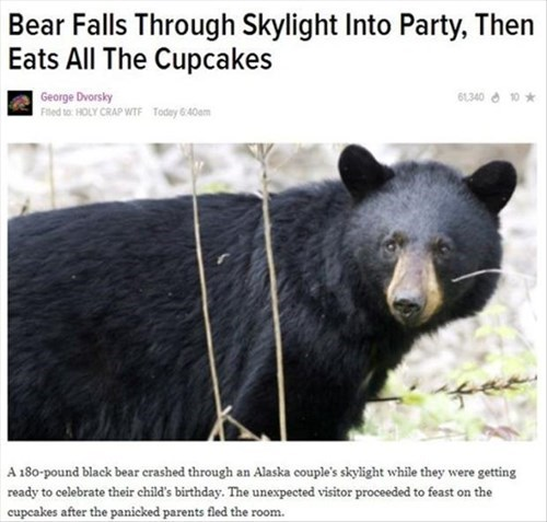 news,bears,noms,funny