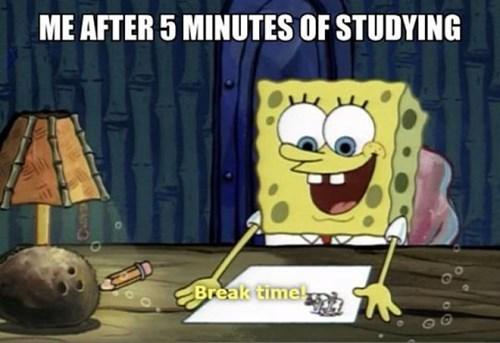 funny,studying,SpongeBob SquarePants