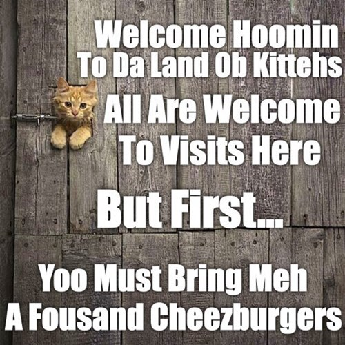 kitten cute cheeseburgers Cats - 8248262912