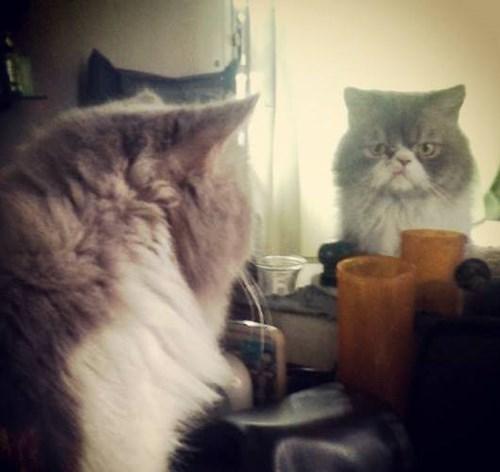 mirror grumpy Cats funny - 8248584704