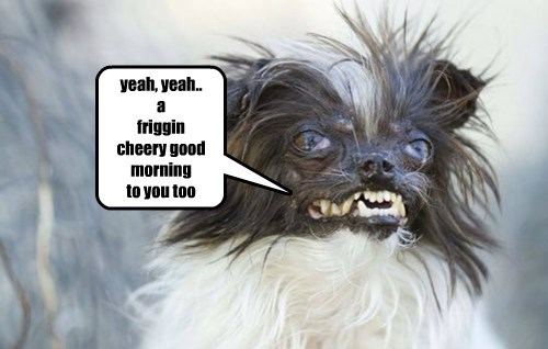 dogs sarcastic good morning cheery caption
