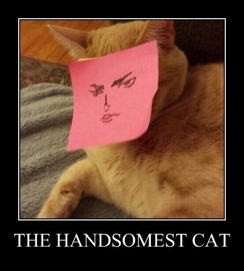 Cats,handsome,funny,post it