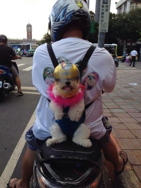 dogs,motorcycle,helmet,t shirts,poorly dressed