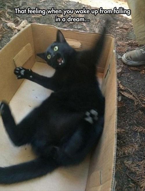 Cats dreams falling funny - 8248867072
