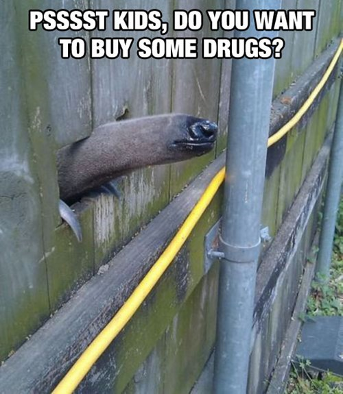 drugs anteater funny