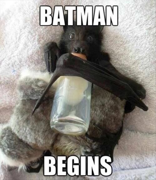 Babies,bats,literalism,batman,funny
