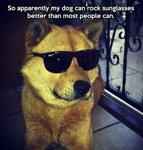 dogs,terminator,sunglasses